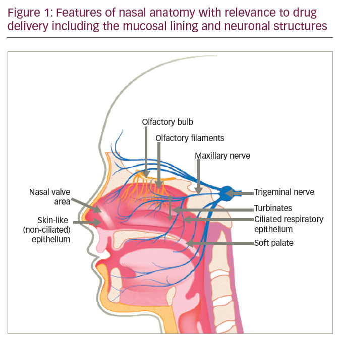 >Novel Intranasal Delivery of Sumatriptan as a Route to Rapid and Sustained Relief in the Acute Treatment of Migraine