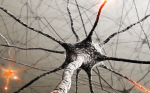 Special Report—First Comprehensive Guidelines Published for Neurostimulation Therapy
