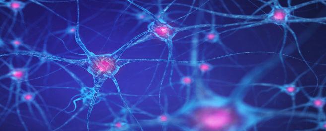 Neuro-8.jpg