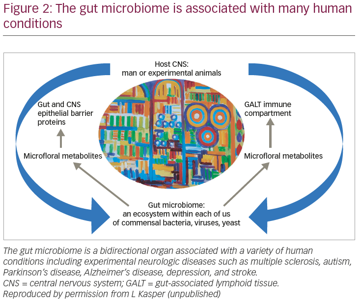 Exploring the Role of the Microbiome in Multiple Sclerosis