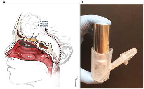 The Upper Nasal Space—A Novel Delivery Route Ideal for Central Nervous System Drugs